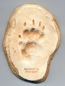 Coatimundi Track Cast (Small Plaque)
