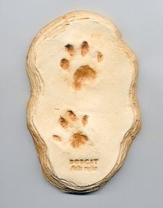 Bobcat Kitten Track Cast (Small Plaque)