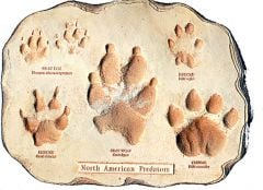 North American Predator Track Plaque