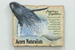 Humpback Whale Magnet