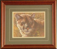 "Mountain Lion ""Golden Cat"" Framed Print"