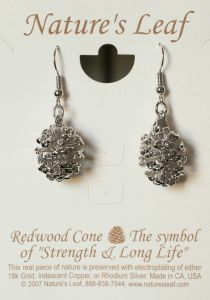 Redwood Cone Silver Earrings (Nature'S Leaf)