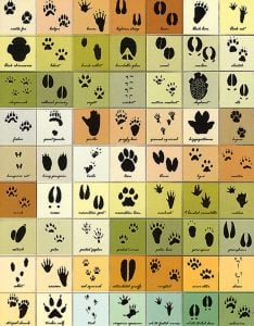 Magnetic Animal Tracks