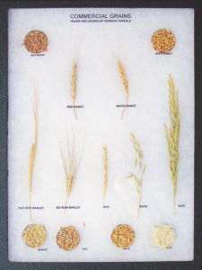 Commercial Food Grains Display