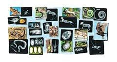 Animal Diversity X-Rays
