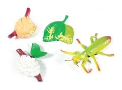 Praying Mantis Life Cycle Models Set