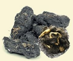 Owl Pellet Replica: Mole Skeleton (Perfect Pellet®)