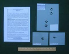 Cat (Domestic) Tracking Stencils