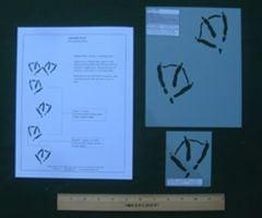 Duck (Mallard) Tracking Stencils