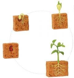 Bean Plant Life Cycle Models