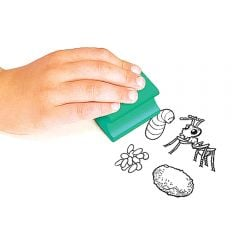 Ant Life Cycle Rubber Stamp Set