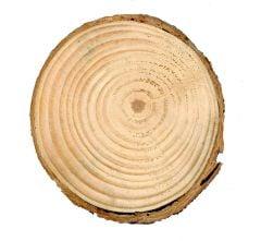 Pine (Gray) Tree Round