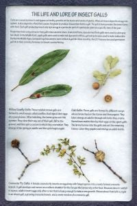 Plant Parasites Display: The Life and Lore of Insect Galls