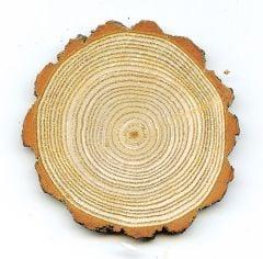 Sassafras Tree Round