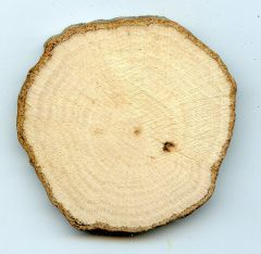 Hickory Tree Round