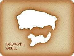 Squirrel Trace-A-Skull® Template
