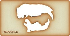 Beaver Trace-A-Skull® Template