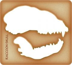 Raccoon Trace-A-Skull® Template