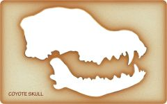 Coyote Trace-A-Skull® Template