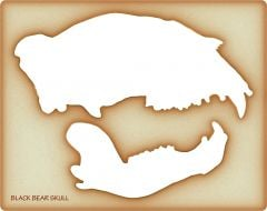 Bear Trace-A-Skull® Template