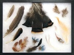 Comprehensive Feather Types Display