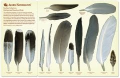 North American Bird Feather Replicas® Set: Wetland & Seashore Birds