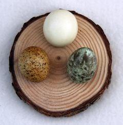 Natural Pine Egg Stand (Three Medium Holes On One Round).