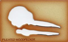 Woodpecker (Pileated) Trace-A-Skull® Template.