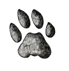 Bobcat Track Stamp (Front Right Foot)