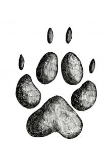 Coyote Track Stamp (Front Left Foot)
