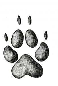 Coyote Track Stamp (Front Right Foot)