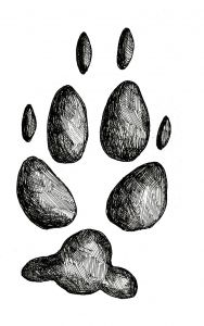 COYOTE TRACK STAMP (Rear Left Foot).