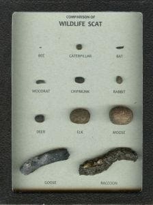 Comparison of Wildlife Scat Display