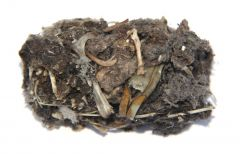Barn Owl Pellet (Regular)