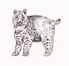 Bobcat Rubber Stamp