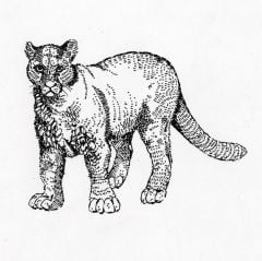 Cougar Rubber Stamp