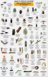 Mac's Field Guide® to Garden Bugs of California (Laminated)