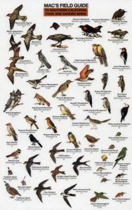 Mac's Field Guide® to Southern California Park and Garden Birds (Laminated)