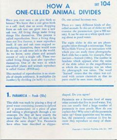 How a One-Celled Animal Divides (Microslide® Lesson Set)