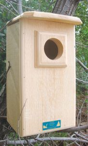 Screech or Saw-Whet Owl House