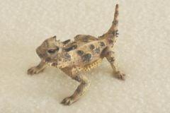 Texas Horned Lizard Sculpture (2½