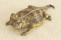 California Coastal Horned Lizard Sculpture (5