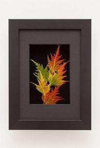 Birch Leaf Shadowbox Framed Art