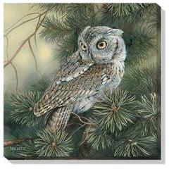 Screech Owl Wall Canvas