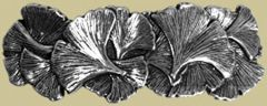 Pewter Ginkgo Leaf Barrette