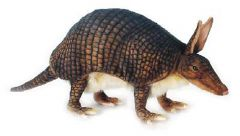 Armadillo (Hansa Plush)