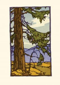 California Redwoods (Boxed Notecards)