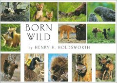 Born Wild (Boxed Notecards)