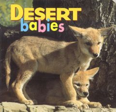 Desert Babies (Board Book)
