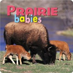 Prairie Babies (Board Book)